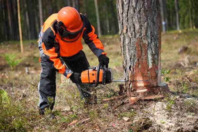 Chainsaw Safety Chaps Tips